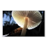 Mushroom Gills Backlit Rectangle Sticker