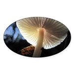 Mushroom Gills Backlit Oval Sticker (50 pk)