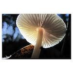 Mushroom Gills Backlit Large Poster