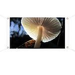 Mushroom Gills Backlit Banner