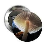 """Mushroom Gills Backlit 2.25"""" Button (100 pack"""
