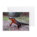 Rough Skinned Newt Greeting Card