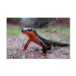 Rough Skinned Newt Mini Poster Print