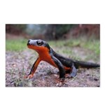 Rough Skinned Newt Postcards (Package of 8)