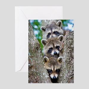 Baby Raccoon Trio Greeting Card