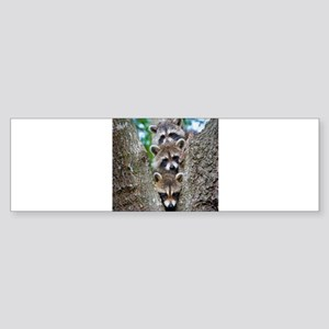 Baby Raccoon Trio Bumper Sticker