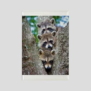 Baby Raccoon Trio Rectangle Magnet