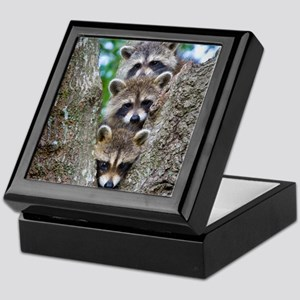 Baby Raccoon Trio Keepsake Box