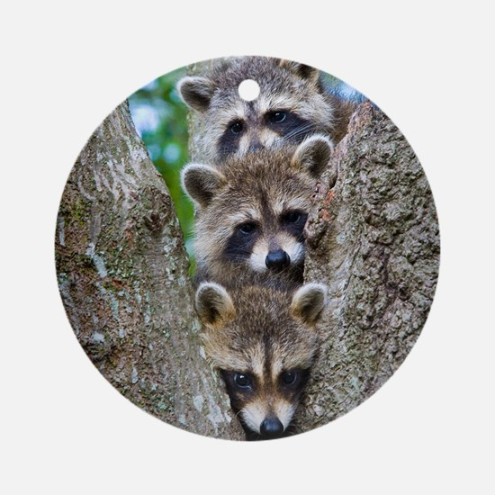 Baby Raccoon Trio Ornament (Round)