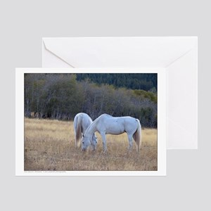 Grazing Gray Horses - Montana Greeting Card