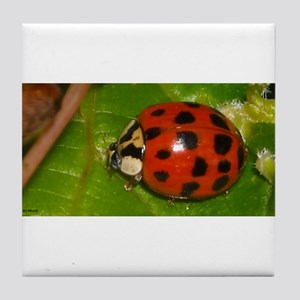 Ladybug on Leaf Tile Coaster