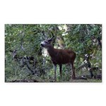 Buck and Doe Rectangle Sticker 50 pk)