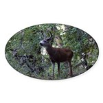 Buck and Doe Oval Sticker (50 pk)