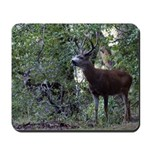 Buck and Doe Mousepad