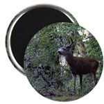 Buck and Doe Magnet