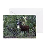 Buck and Doe Greeting Card
