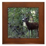 Buck and Doe Framed Tile
