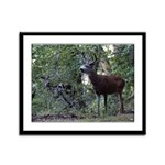 Buck and Doe Framed Panel Print