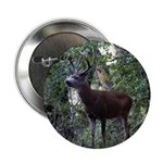 """Buck and Doe 2.25"""" Button"""