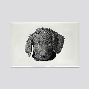 Cute Curly Coat Puppy - Rectangle Magnet