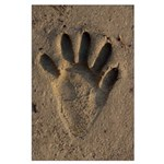 Raccoon Hind Track Large Poster