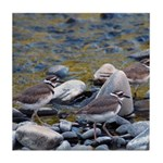 Killdeer Tile Coaster