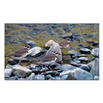 Killdeer Rectangle Sticker 50 pk)