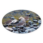 Killdeer Oval Sticker (10 pk)