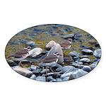 Killdeer Oval Sticker (10 pk)