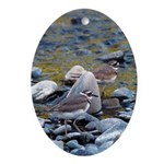 Killdeer Oval Ornament