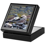 Killdeer Keepsake Box