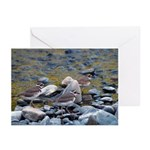 Killdeer Greeting Cards (Pk of 20)