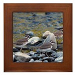 Killdeer Framed Tile