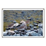 Killdeer Banner