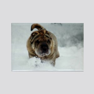 Snow Shar-Pei Rectangle Magnet