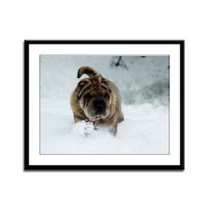 Snow Shar-Pei Framed Panel Print