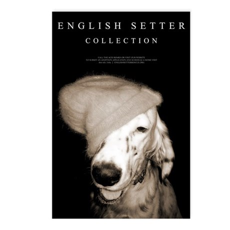 English Setter Collection Postcards (Package of 8)