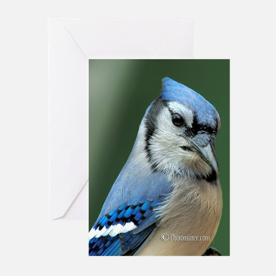 Blue Jay Greeting Cards (Pk of 20)