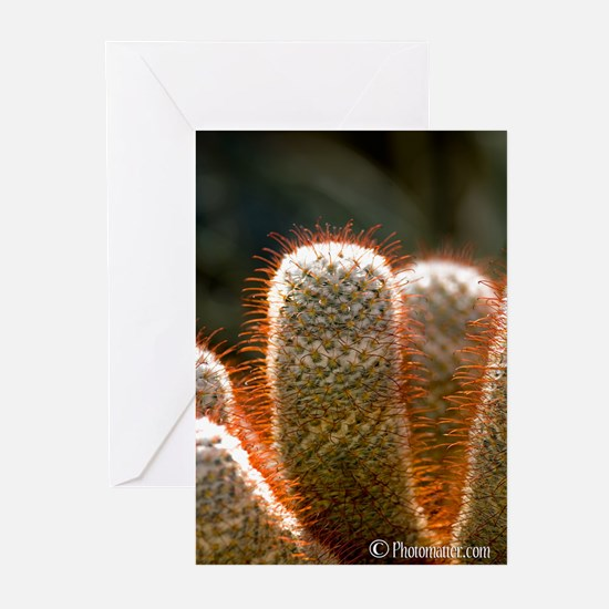 Cactus Flower Greeting Cards (Pk of 20)