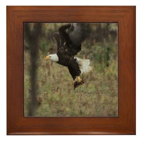 Llano County American bald eagle Framed Tile