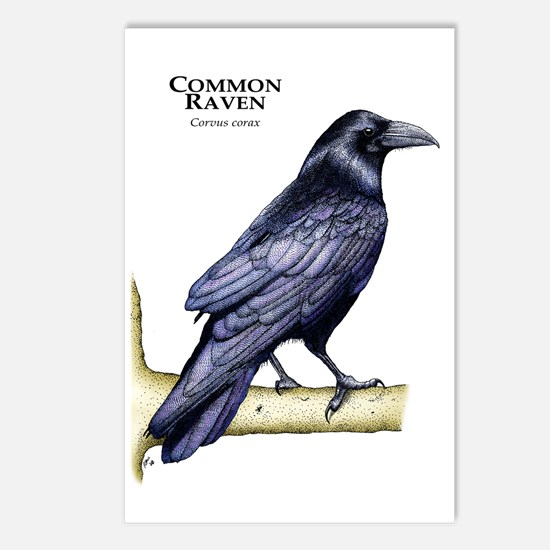Common Raven Postcards (Package of 8)