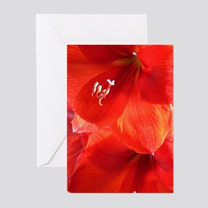 Amaryllis in the Sunshine Greeting Cards (Package