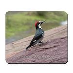 Acorn Woodpecker on a Rock Mousepad