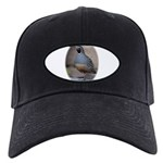 California Quail Black Cap