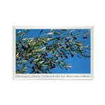 Wine Country California Ripe Olives Magnet