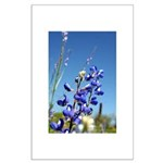 Bluebonnet Large Poster by Penny Mikeman photos
