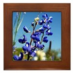 Bluebonnet Framed Tile by Penny Mikeman Photos
