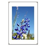 Bluebonnet Banner by Penny Mikeman photos