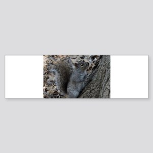 Squirrel 2 Bumper Sticker