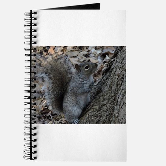 Squirrel 2 Journal